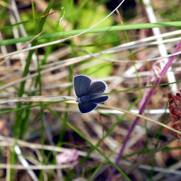 Small blue 3